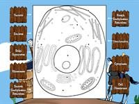 Animal Cell Diagram Labeling