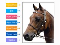 Labelled diagram Label bridle
