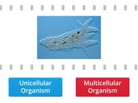 Unicellular vs. Multicellular Organisms True/False