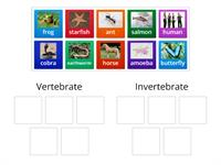 Vertebrate or invertebrate