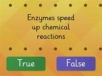 Enzyme True or False