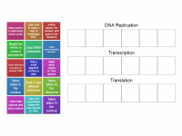 Replication, transcription, translation