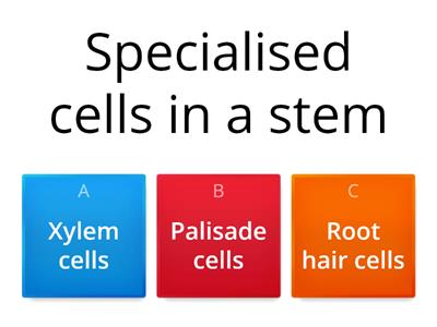 specialised cell mini quiz