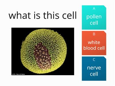 cells picture quiz