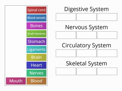 Organs and organ systems catergory quiz 7Y3 and 7X4