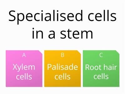 Specialised cells F quiz