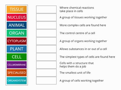 Cells keyword match