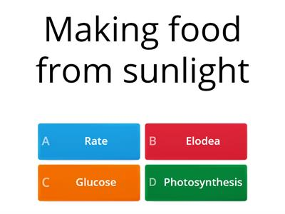 Photosynthesis (KS3)