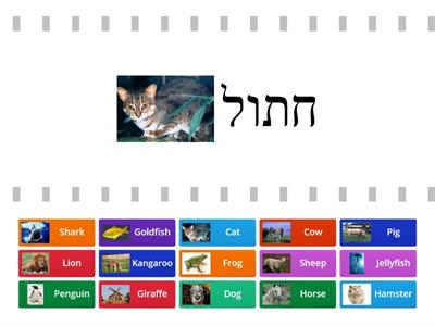 15 Animals in Hebrew