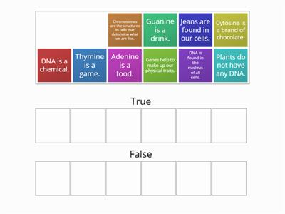 True or false the relationship between genes, chroms and DNA