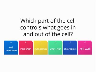Quiz parts of a cell