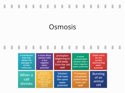 Osmosis key words