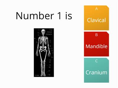 Skeleton bones quiz