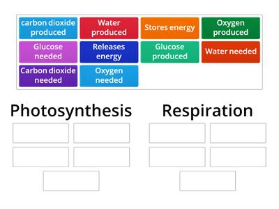 y9 photosynthesis vs respiration