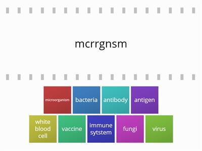 B2 immune system words