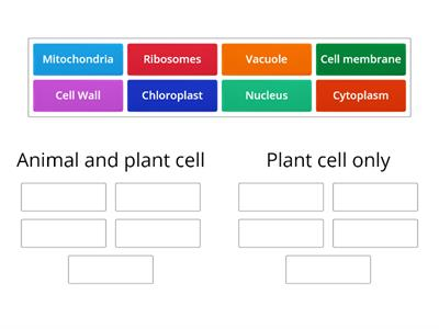 animal and plant cell structures