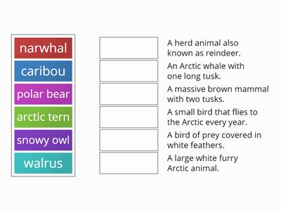 Arctic animals _ Match-Up