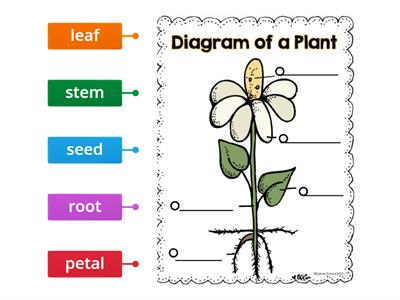 Diagram of a Plant