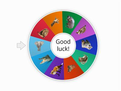 Spin the Wheel and Get an Animal