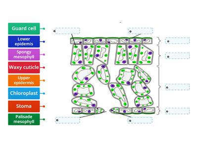 Plant tissue labels
