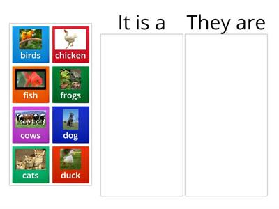 animals plural and singular