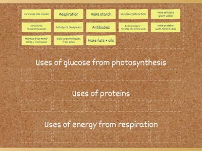 Uses of glucose, proteins AND energy