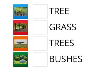 BUSHES, TREE OR GRASS