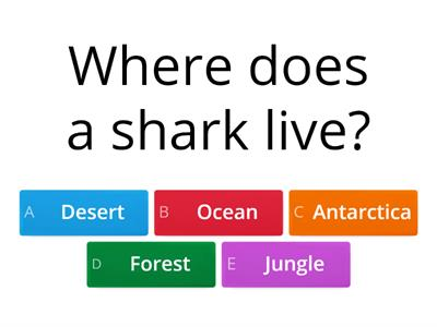 Sea animals quiz
