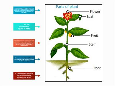 YASSEIN_Parts of plant and functions