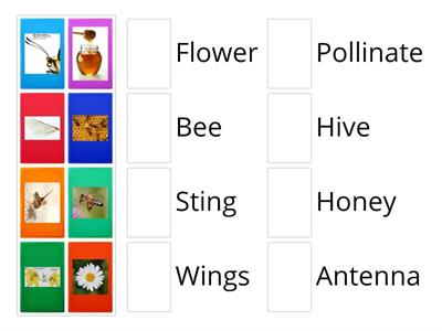 Honey bees matching game