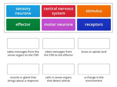 nervous system key words