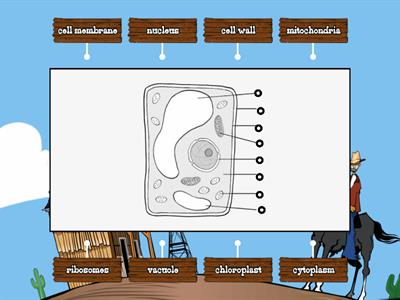 KS4 Cell cycle - Teaching resources