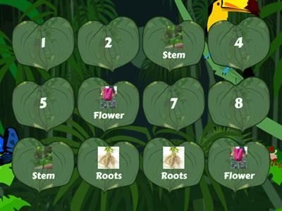 Plant parts matching pairs Y1