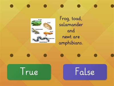 Facts about Amphibians