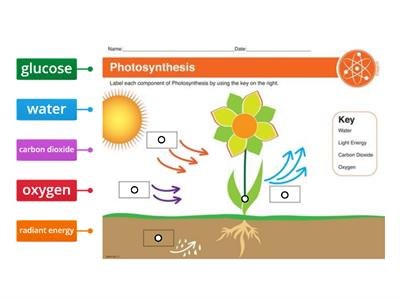 Photosynthesis label the diagam