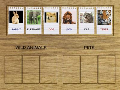 Pets and Wild Animals