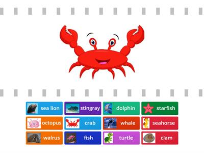 Sea animals sorting