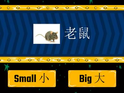 True or False - Big or Small 大或小