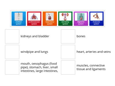 Body Systems and Structures matchup