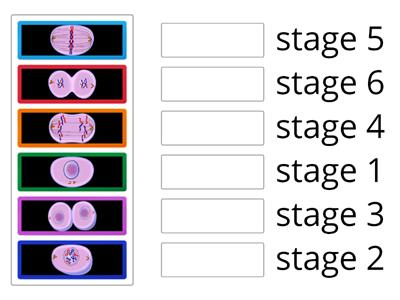 Mitosis - arrange stages in correct order