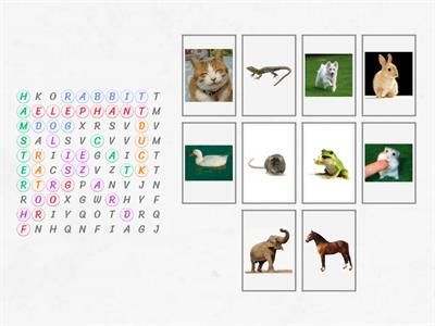 Y1 Word search: Animals