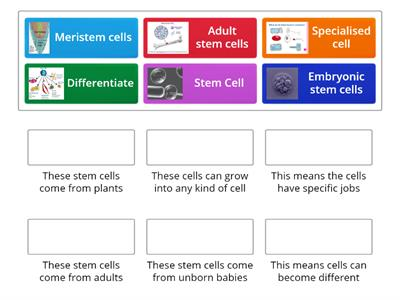 B2 Stem Cells Revision