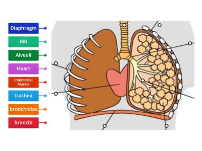 Labelling breathing system