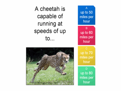 A cheetah is capable of running....