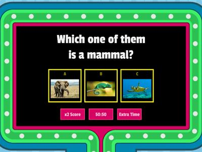 matching exercises about animals