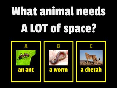 Animal Needs (CLASSWORK) - 5.3