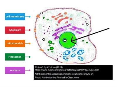 Picture Organelle Review