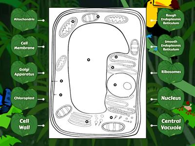 Plant Cell Diagram Labeling