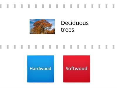 Hardwood vs. Softwood Trees