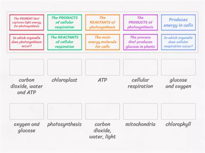 photosynthesis / cellular respiration